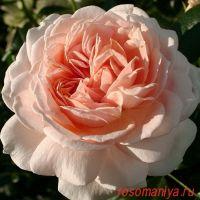 Гарден оф Розес (Garden of Roses)