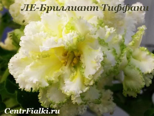 ЛЕ-Бриллиант Тиффани (Е.Лебецкая)