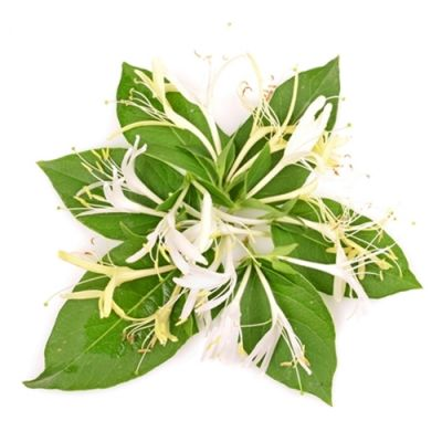 Honeysuckle (PG) (TPA)