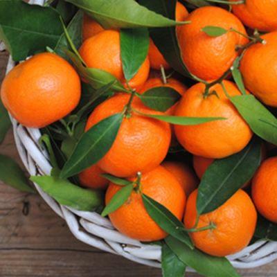 Orange Mandarin (TPA)