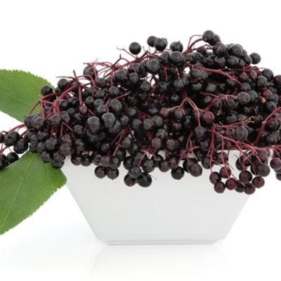 Elderberry (TPA)
