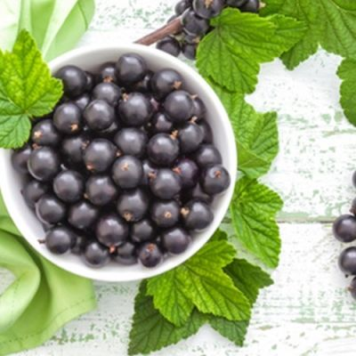 Black Currant (TPA)