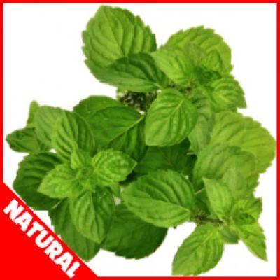 Spearmint (Natural) (FW)