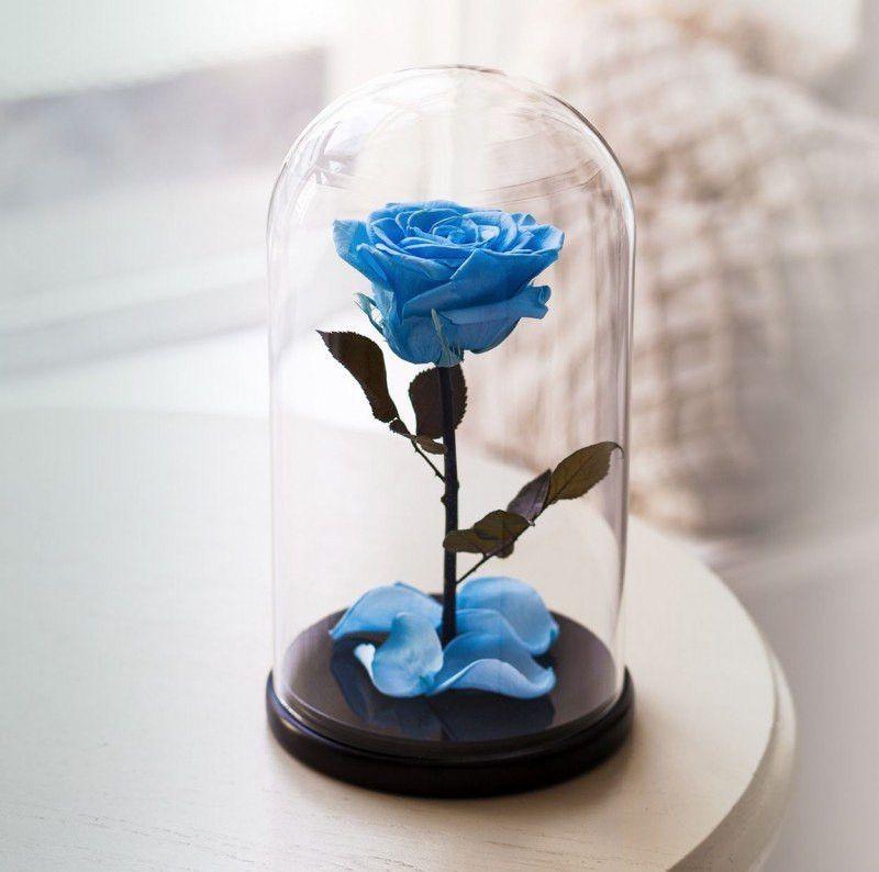 Роза в колбе + подарочная упаковка