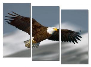 Размах крыльев 2