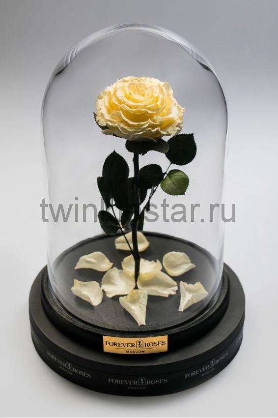 Роза в колбе (кремовый) на прямом стебле, 33 см
