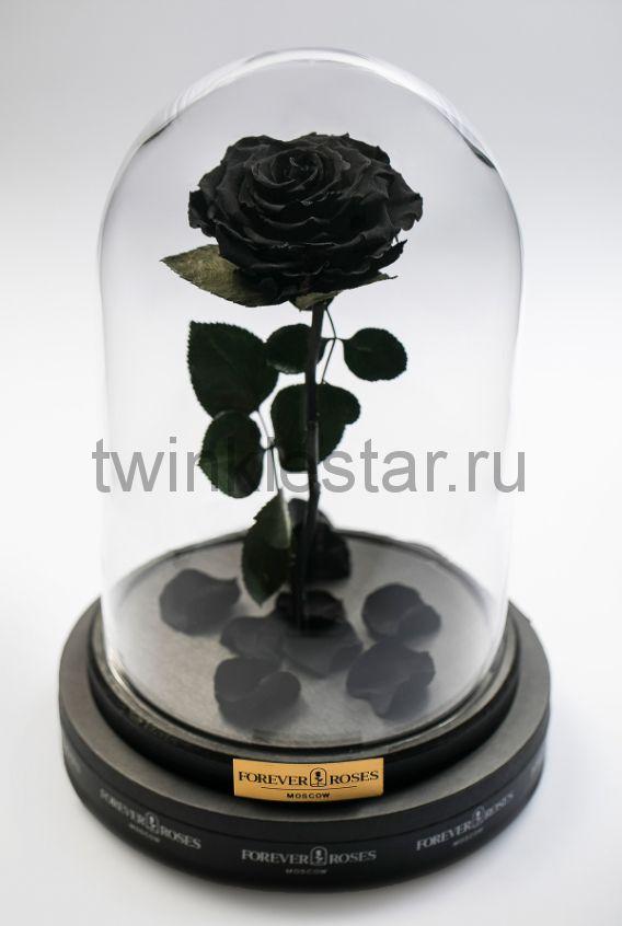 Роза в колбе (черная) на прямом стебле, 33 см