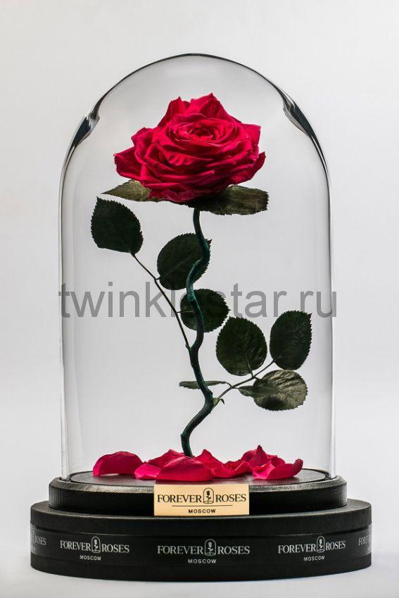 Роза в колбе (ярко розовая) на изогнутом стебле, 33 см