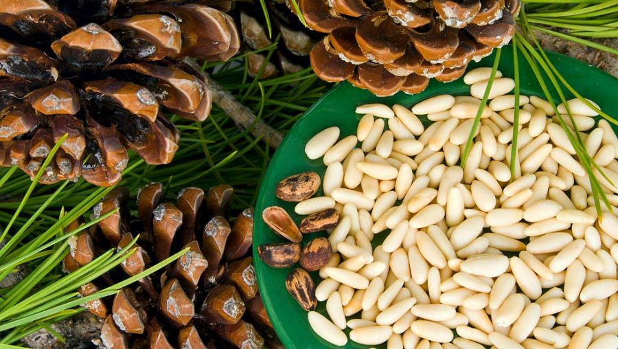 Дальневосточный Кедровые орех очищенные