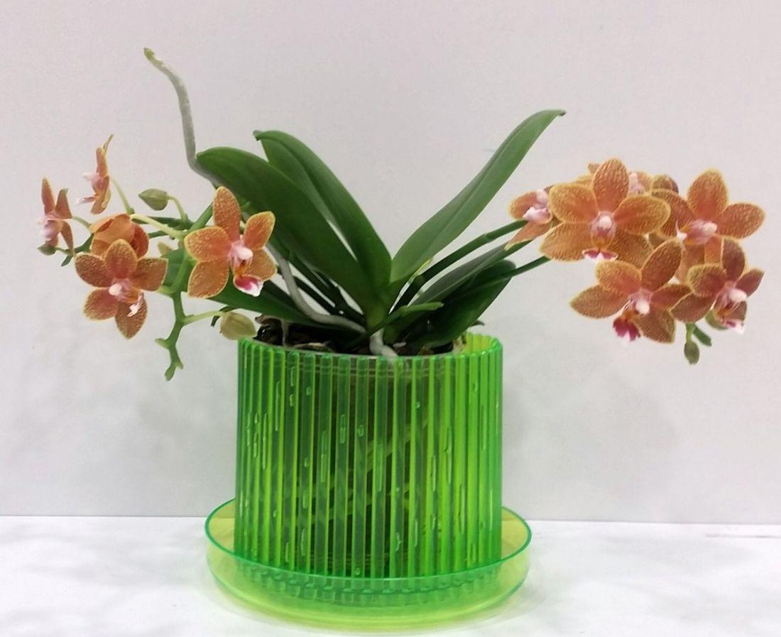 Кашпо для орхидей Корона (мини)