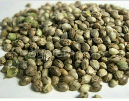 Семена конопли (300 грамм)