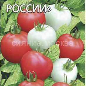 Яблонька России Тамина