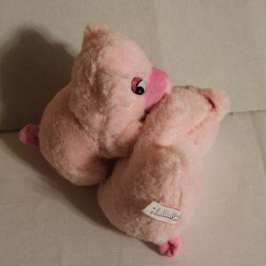 ! свинки пара роз, ячейка: 75