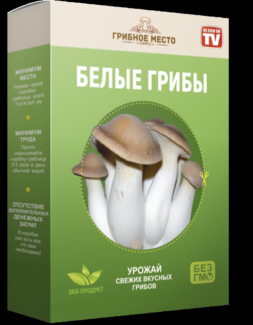 """Грибница в коробке """"Грибное место"""" Белые грибы"""