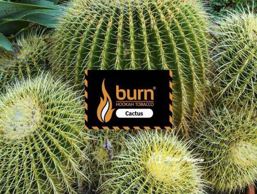 Burn - Cactus (сладкий вкус колючего мексиканского кактуса)