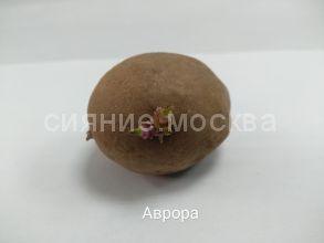 """Семенной картофель Супер Элита """"Аврора"""", 1 шт."""