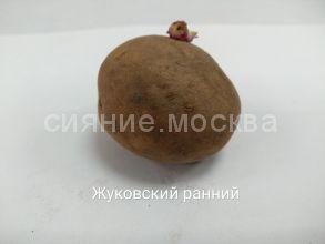Семенной картофель Супер Элита Жуковский ранний, 1 шт.
