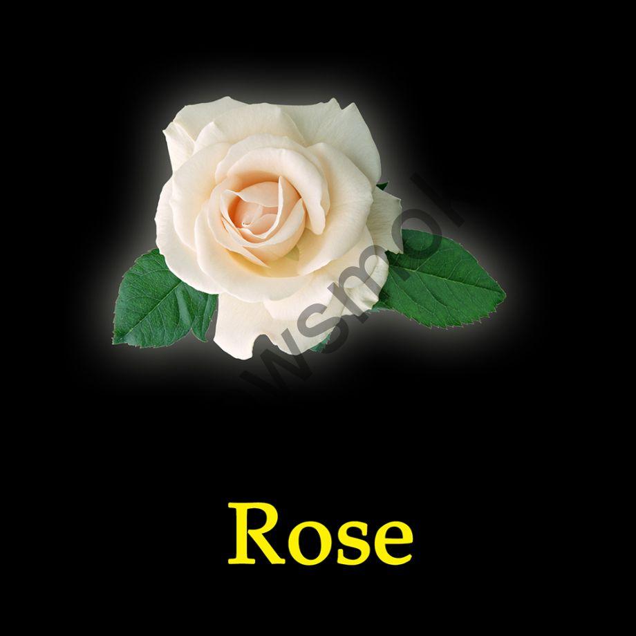 New Yorker Yellow 100 гр - Rose (Дикая Роза)