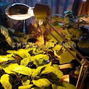 "Комплект для досветки растений 100 ВТ: Фитосветильник РЕФЛАКС ""Солнышко"" 100 ВТ ПРА + Лампа ДНаЗ / Рефлакс 100-2/G"