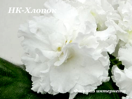 НК-Хлопок (Н.Козак) НОВИНКА