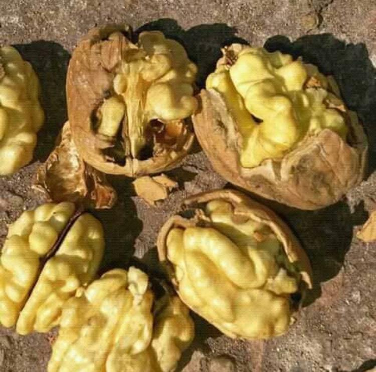 саженцы грецкого ореха васион минимальное количество 100шт