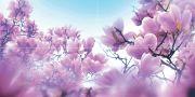 Magnolia Панно P4D297 80х40 (из 4 плиток)