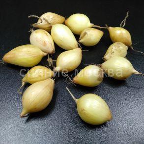 Лук- севок Стурон, 100 гр.