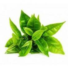 Глицериновый экстракт зеленого чая 30 гр
