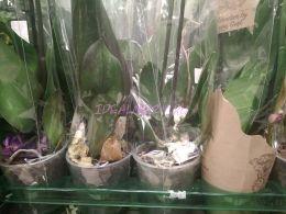Листья орхидей