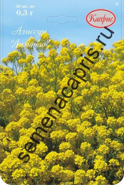 Алиссум Лимонад, (многолетний, желтый) (Каприс)