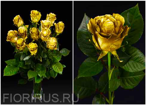 Роза Эквадор Голд спрэй (Gold Spray)