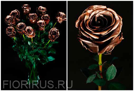 Роза Эквадор Дарк голд (Dark Gold)