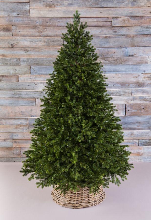 Триумф Можжевельник 185 см зеленый