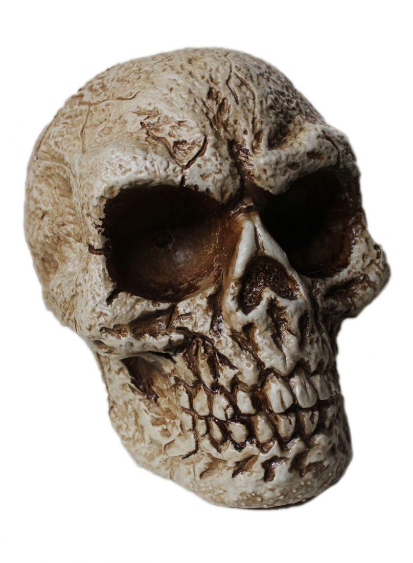 Древний череп