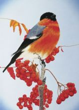 Почтовая открытка Снегирь на ветке рябины