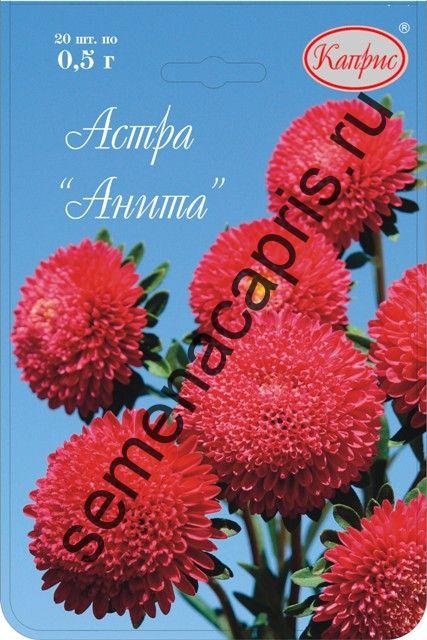 Астра Помпонная красная Анита (Каприс)