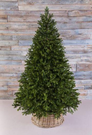 Триумф Можжевельник 230 см зеленый