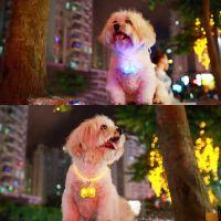 Светодиодный брелок-адресник с информационной наклейкой для собак Косточка (3)