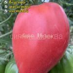 tomat-tomat-egipetskij-rozovyj-kollekcionnyj-myazinoj