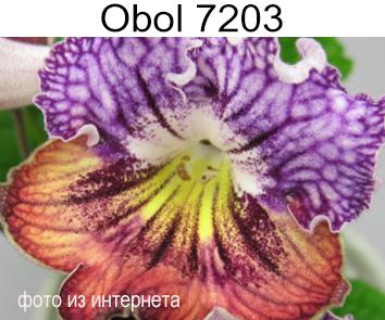 Obol-7203 (P.Kleszczynski)