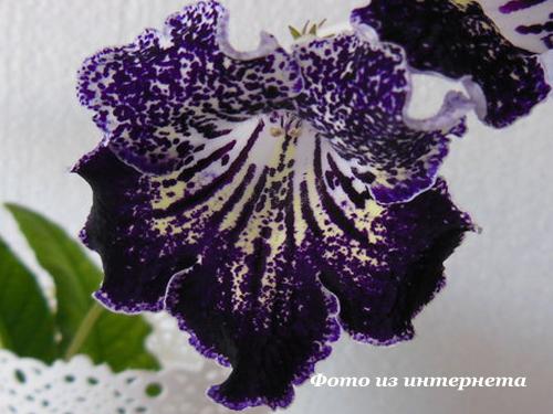 UA-Индиго (Ю.Склярова)