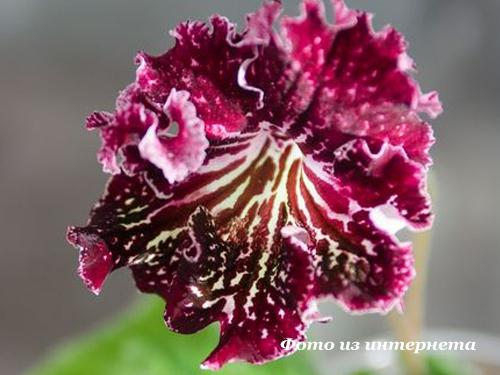 UA-Колискова Зiрок (Ю.Склярова)