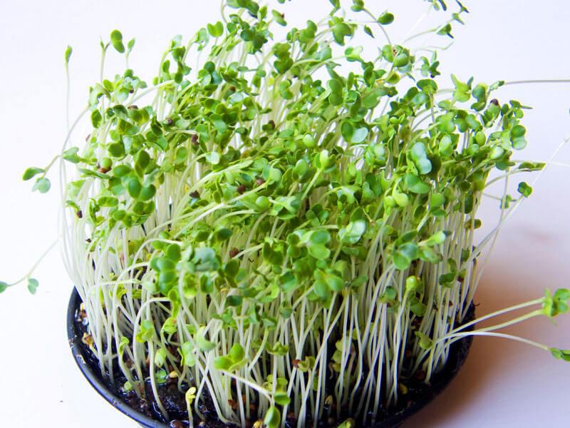 набор для выращивания льна микрозелень