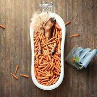 Horse Box от Florian. Цитра -  поедательница моркови