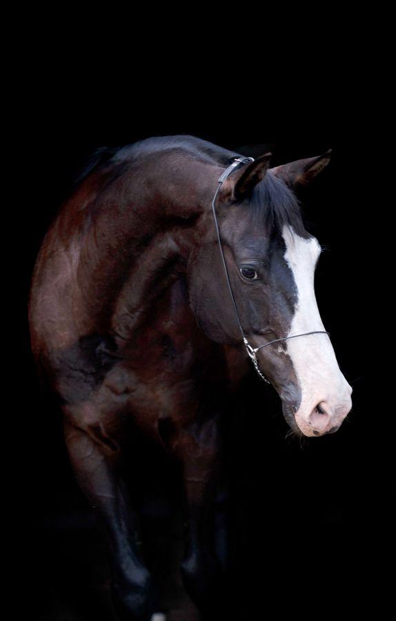 Horse Box от Florian. Загадочный Запрос