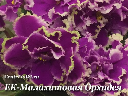 ЕК-Малахитовая Орхидея (Е.Коршунова)