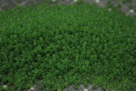 Бисер чешский 50430 прозрачный зеленый матовый Preciosa 1 сорт