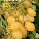 tomat-sumasshedshie-vishni-barri
