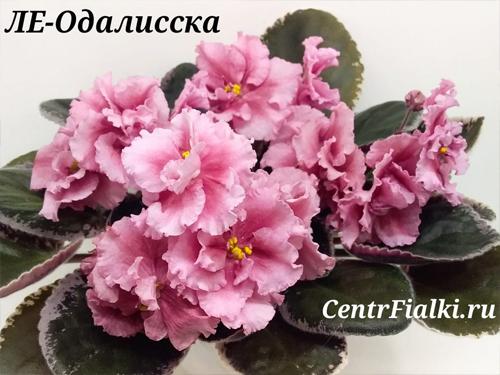 ЛЕ-Одалиска (Е. Лебецкая)