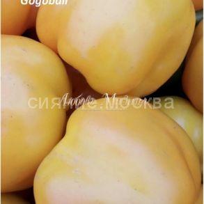 Перец сладкий Гогошар желтый (Мязина авторский), 8 шт.